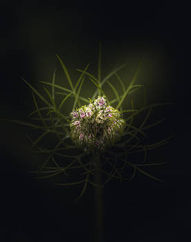 Flower Flake by Paul Barson