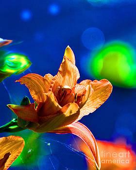 Flower by Fred L Gardner