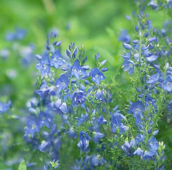 Kim Hojnacki - Flower Frenzy