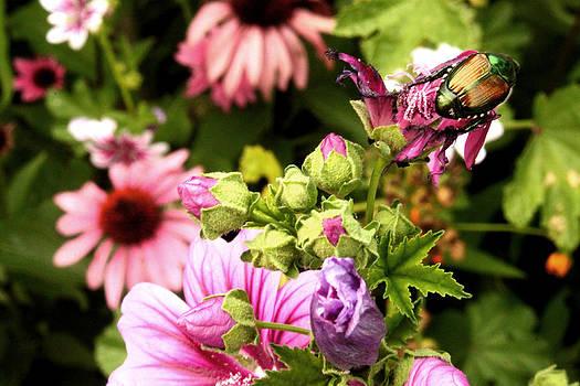 Flower Friend by Terri JS Molitor