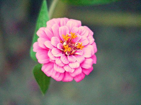Flower Garden by Making Memories Photography LLC