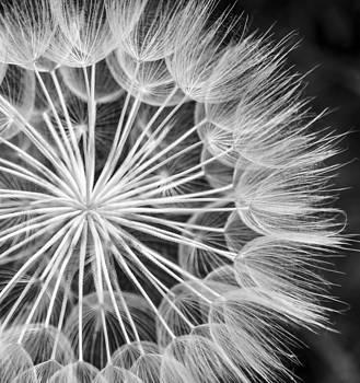 Flower Head by Alastair Graham