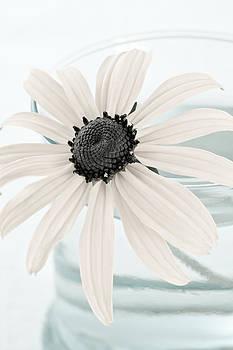 Frank Tschakert - Flower In A Vase Still Life