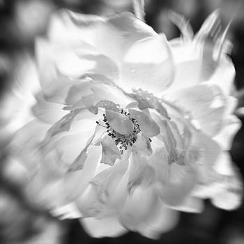Flower in Motion by Michael Newcomb