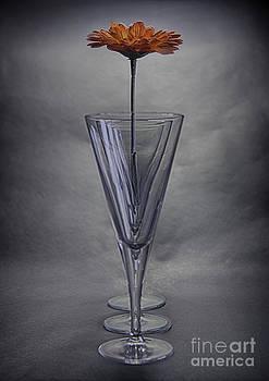 Nigel Jones - Flower in repeating wine glass