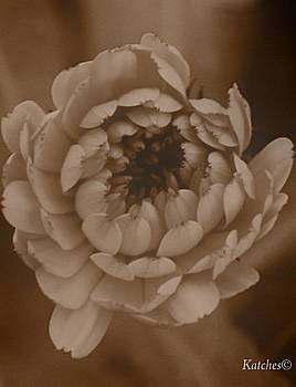 Flower in Sepia by Dream Katches Photography