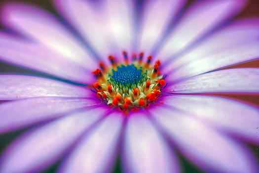 Bruno Rosa - Flower in the spring
