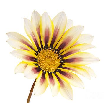 Tim Hester - Flower Isolated