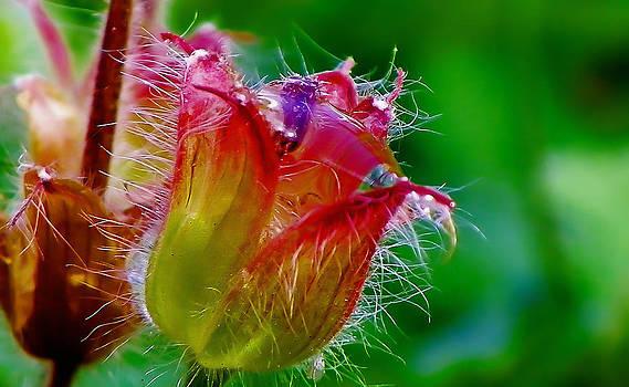Flower jew  by Catherine Davies