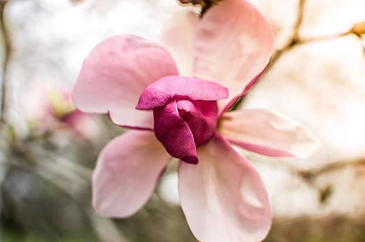 Flower Kiss by Jeanne Etter