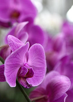 Flower Mart Orchid 1 by Mythic Ink