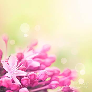 Mythja  Photography - flower