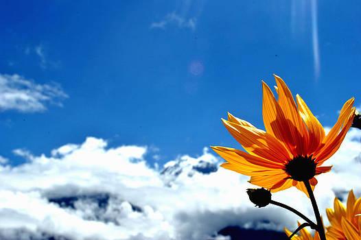 Flower n Hills by Vijinder Singh