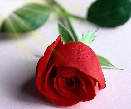 Flower by Noah
