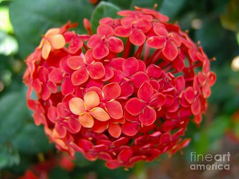 Flower by Nur Roy