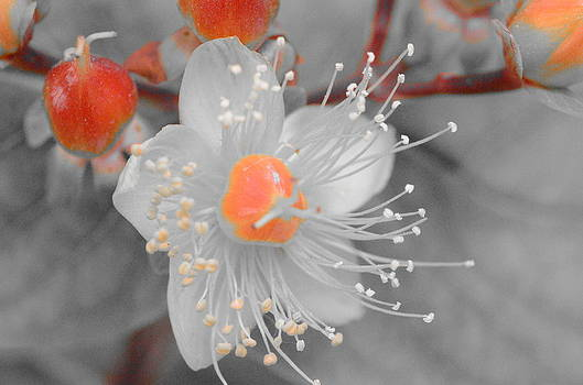 Flower Of June by Riad Belhimer