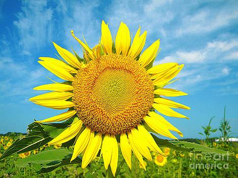 Flower of the Sun by Lorraine Heath