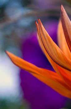Flower on a tabletop by Bill LITTELL