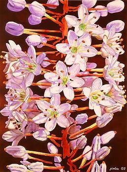 Flower on gavdos  by Konstantinos-Pimba Botas
