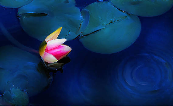 Flower on the Lily by Cary Shapiro