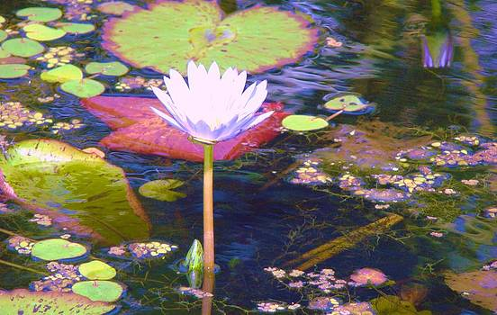 Flower on the Pond by Van Ness