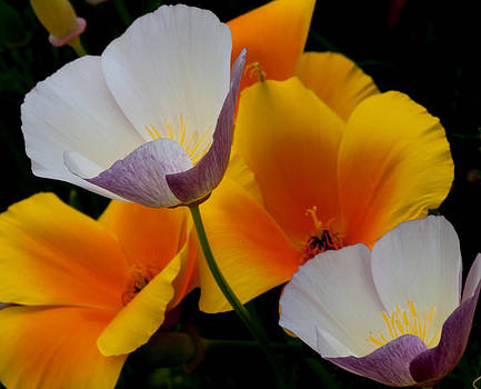 Flower Pairs by Shanna Lewis