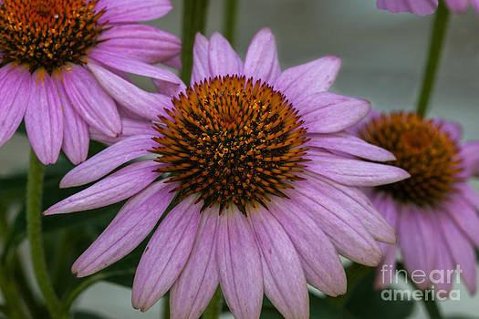 Dale Powell - Flower Petals