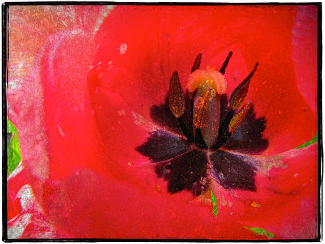Laura Carter - Flower Photograph