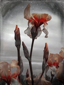 Gothicrow Images - Flower Portrait