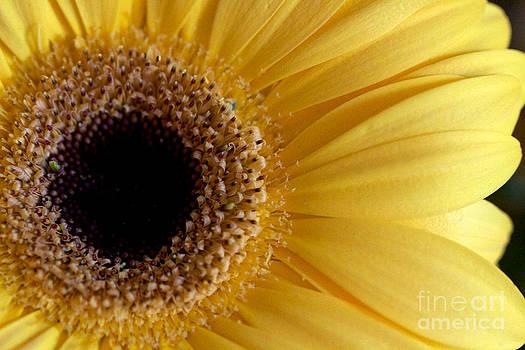 Flower Power All Profits go to Hospice of the Calumet Area by Joanne Markiewicz