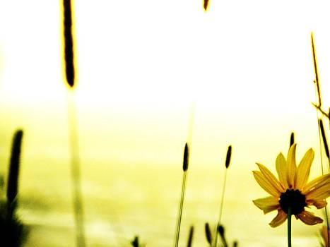 Flower Power by Christian Rooney