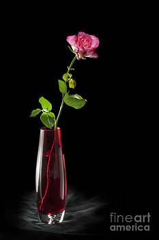 Flower Power by Donald Davis