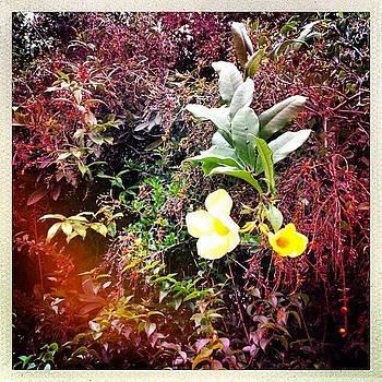 Flower Power by Kerri Green