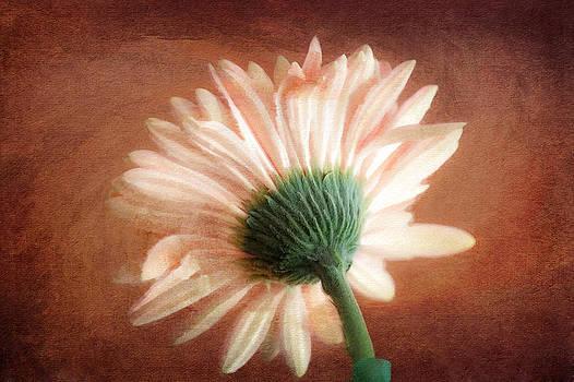 Flower by Saibal Ghosh