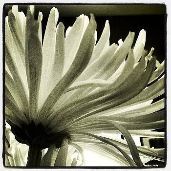 #flower #shadows #instagram by Greta Olivas