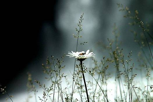 Flower by Stephanie Leidolph