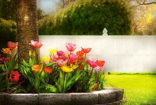 Mike Savad - Flower - Tulip - Spring Tulips