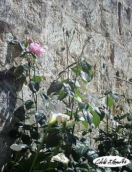 Flower Upon A Wall by Cibeles Gonzalez