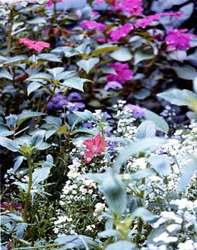 Stephen Proper Gredler - Flower Variety Garden