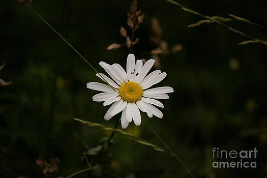 Flower by Vikramjit Sra