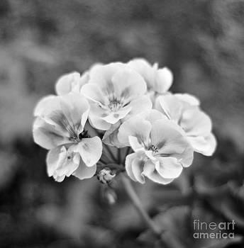 Flower white by Bobby Mandal