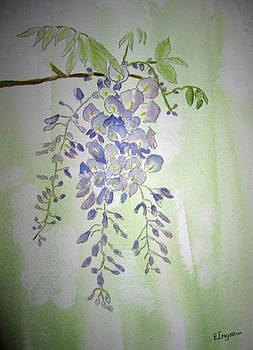Flowering Wisteria by Elvira Ingram