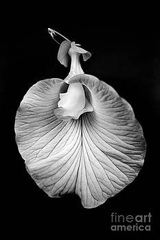 Russ Brown - Flower_1