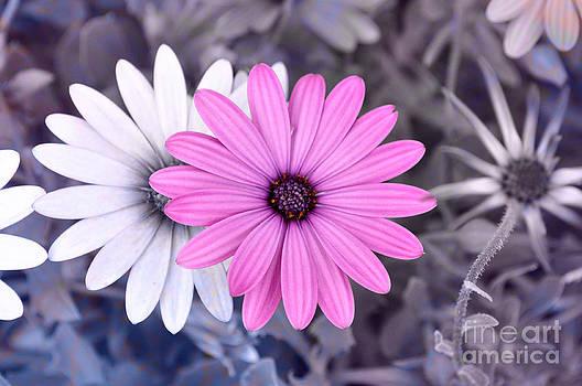 Flower15 by Bener Kavukcuoglu