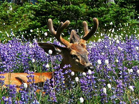 Flowerbed by Heike Ward