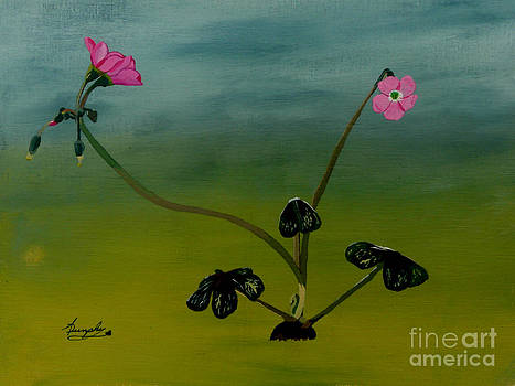 Flowering Clover by Anthony Dunphy