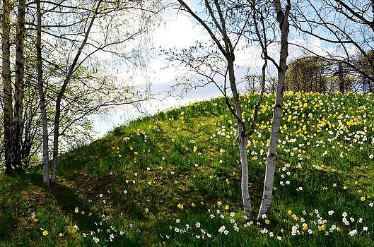Gynt   - Flowering Hill - Spring view