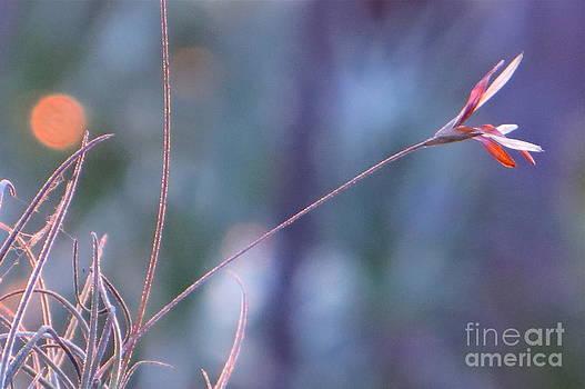 Flowering Moss by Joy Hardee