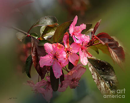 Flowering Peach Tree Photograph by Heinz G Mielke