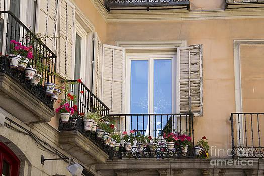 Flowerpots  by Stefano Piccini